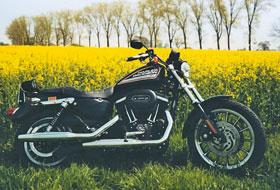 Harley-Davidson XLH 883