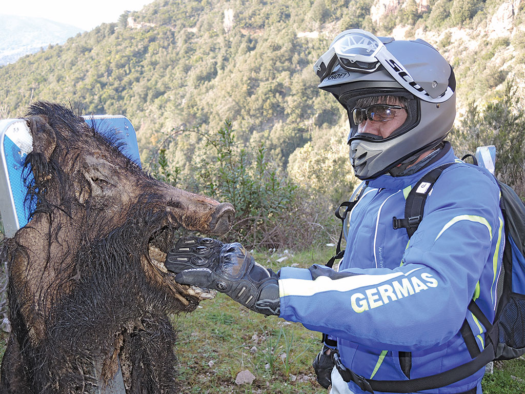 Endurotour Korsika totes Schwein