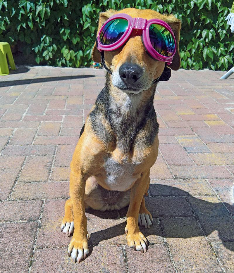Cooler Hund...