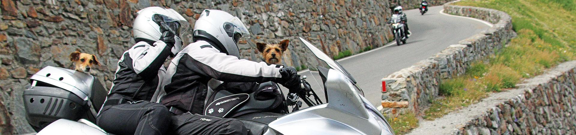 Hunde-auf-Motorrad
