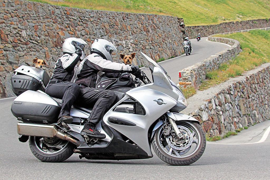 Hunde auf dem Motorrad
