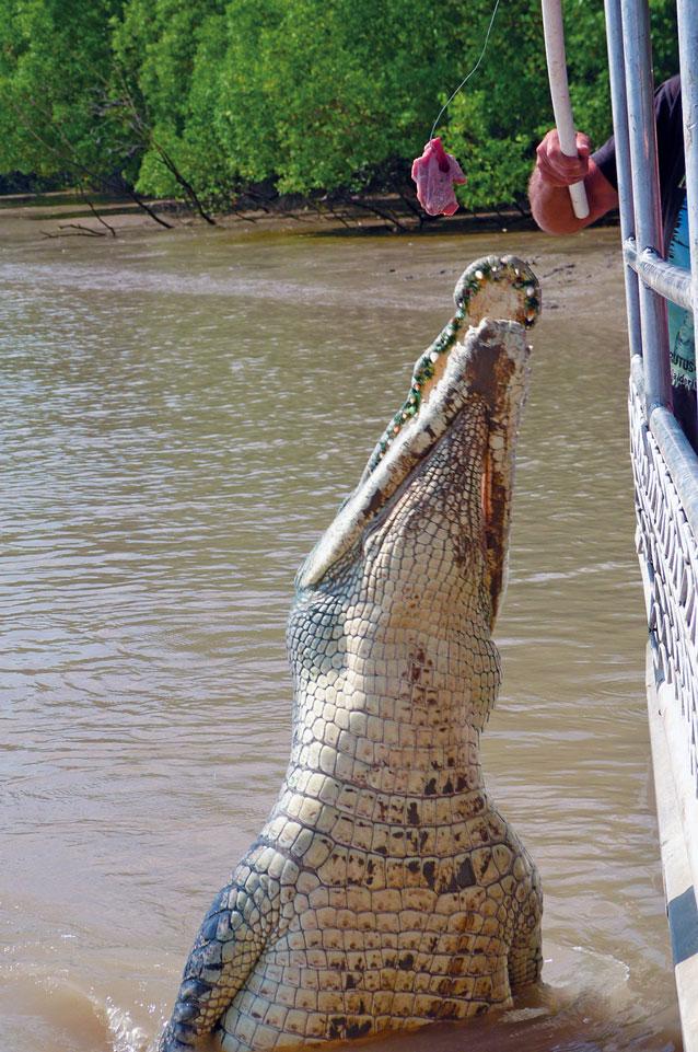 Die springenden Krokodile in Australien - www.bikeandtravel.de