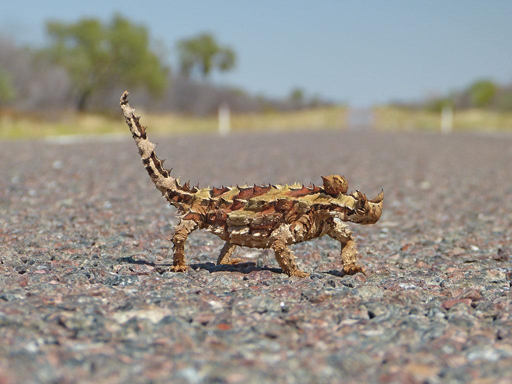 Wildlife in Australien - www.bikeandtravel.de
